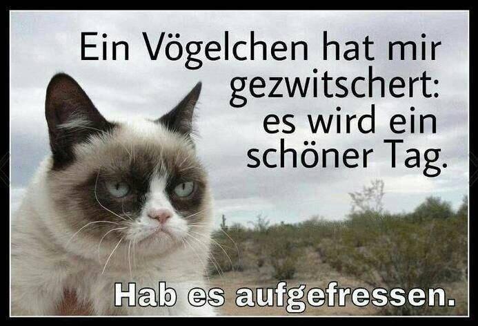 Grumpy Cat mit Spruch